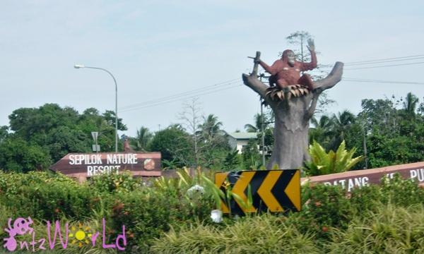 OrangUtan@Sepilok (8)