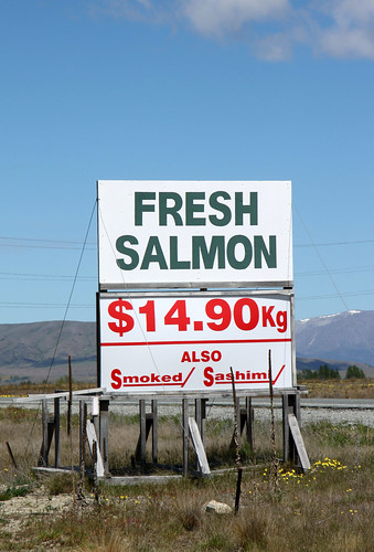 high country salmon  1
