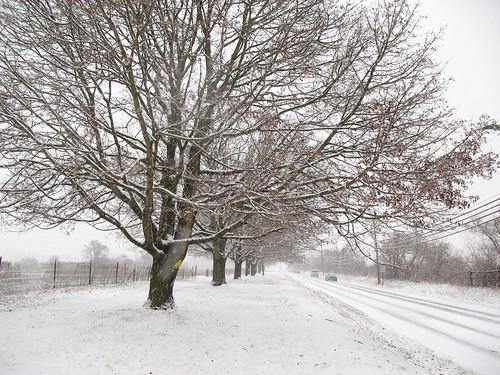 Snowy Walk To Work