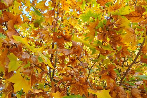 Los (vivos) colores del otoño