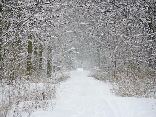 Snowy surroundings
