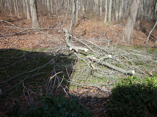 Almost Ready to be Cleared