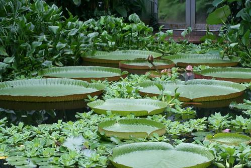 20090919 Edinburgh 20 Royal Botanic Garden 131