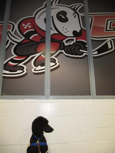 Yankee bij 'Bones', de mascotte van de Niagara Ice Dogs