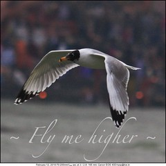 Fly me higher...!!!