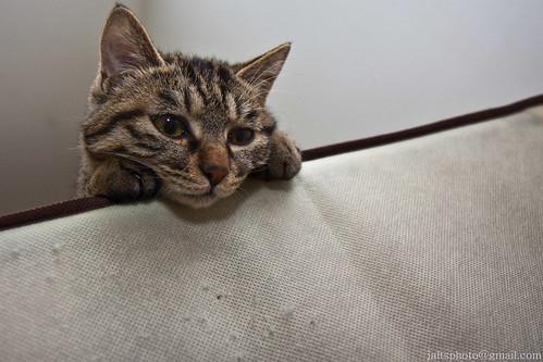 Kitten Glam 04