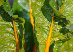 2009-11-21 Chicago Botanic Garden 5