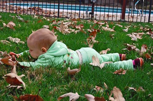 Feb leaves 1