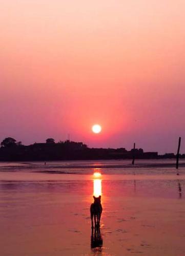 dog-sunset beach..!!!