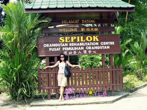 OrangUtan@Sepilok (33)