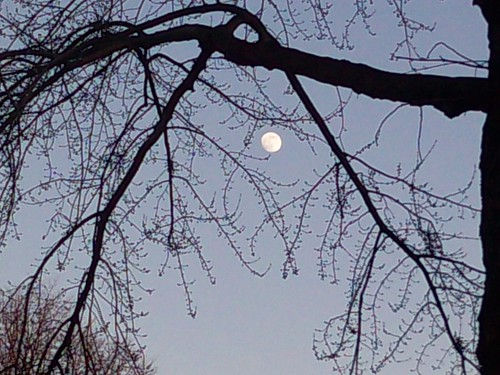 Afternoon Moon Amid Branches, 12/29/09