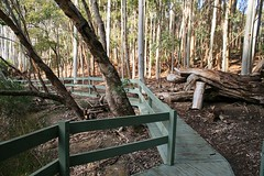 Warrawong Boardwalk