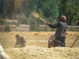 Winnowing the Chaff | Bamiyan