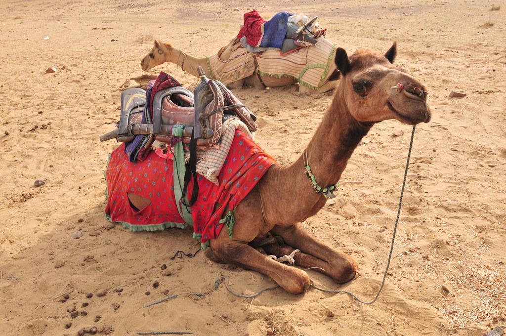 Day in Jaisalmer