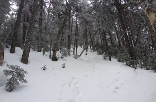 Winter Ammonoosuc Trail