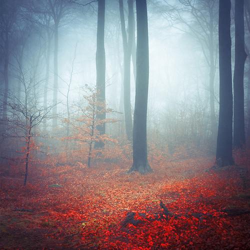 autumn trees light fall nature wet leaves fog forest landscape licht mood nebel path laub herbst natur atmosphere foliage wuppertal landschaft wald bergischesland stimmung weg beechtrees buchenhain bã¤ume atmosphã¤re artfreelancefb