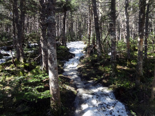 North Twin Trail Ice