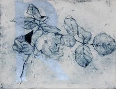 Giuseppina Goglia-Rosa rosae rosae