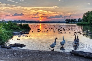 4 out of 5 geese agree - tonight's sunset was ...