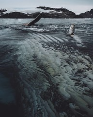 Chasing whales in a kayak is fun, but when they come to you it's better. #theworldwalk #travel #antarctica