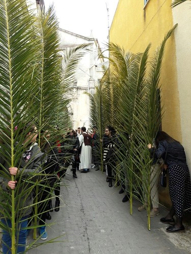Domenica palme 2017 (29)