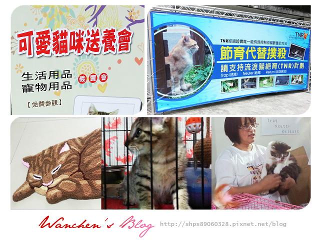 20140614華山貓咪送養_100514