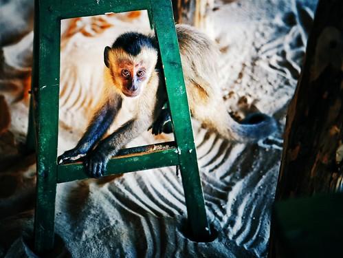 Tenda dos Macacos, Comunidade de Vassouras,   Barreirinhas - Maranhão