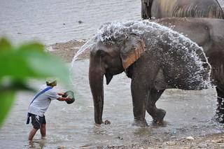 Elephant Nature Park