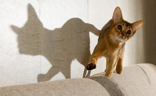 Flibberty and Her Shadow by peter_hasselbom, on Flickr
