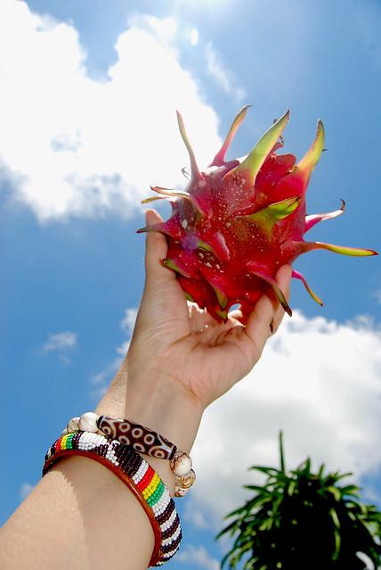 exotic cactus fuit