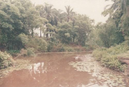 Jungle part of oil palm plantation