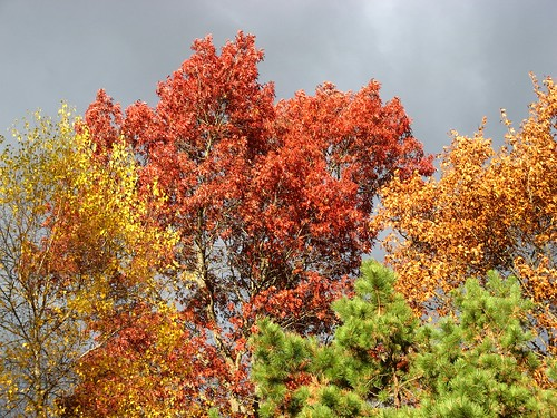 0158 fall in four colors