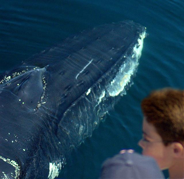 Boy meets Whale