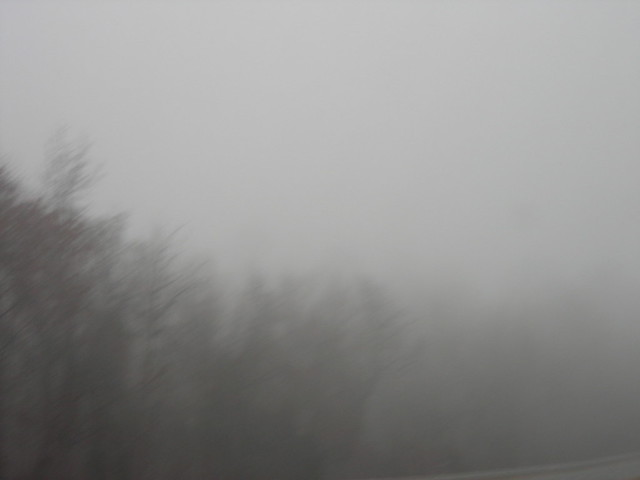 road trip: misty trees outside petersburg