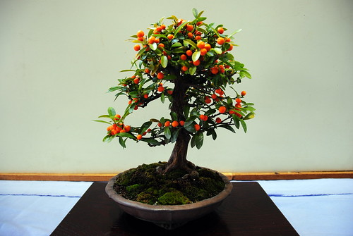 Shidareume Matsuri 011r