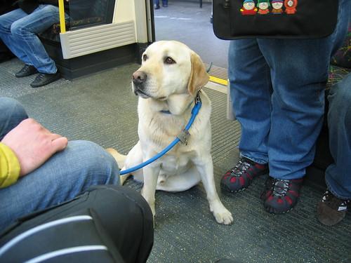 Perro en tranvía