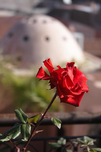 Rose atop the Dar Silsila