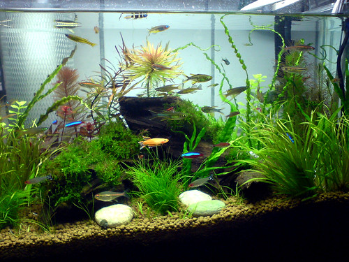 Mixed fish tank