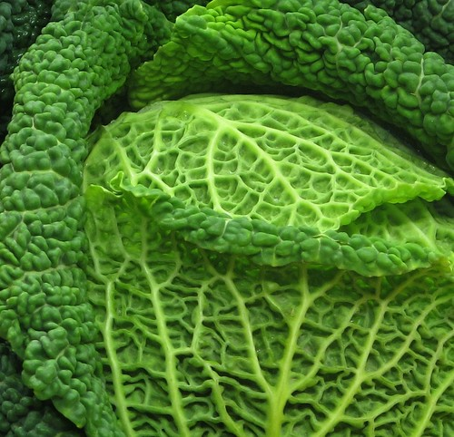 Cabbage - the single subject photo allows an in-depth study of the subject