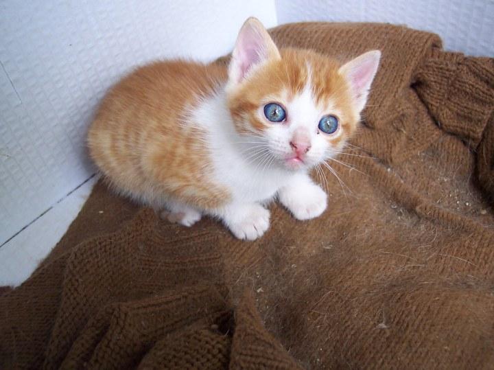 Fotos de gatitos