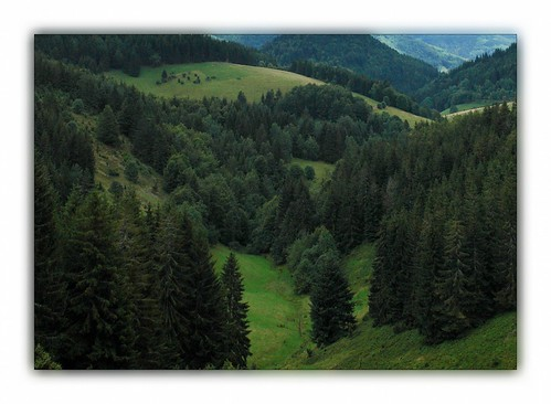 Southern Black Forest Valley by RuedisFotos