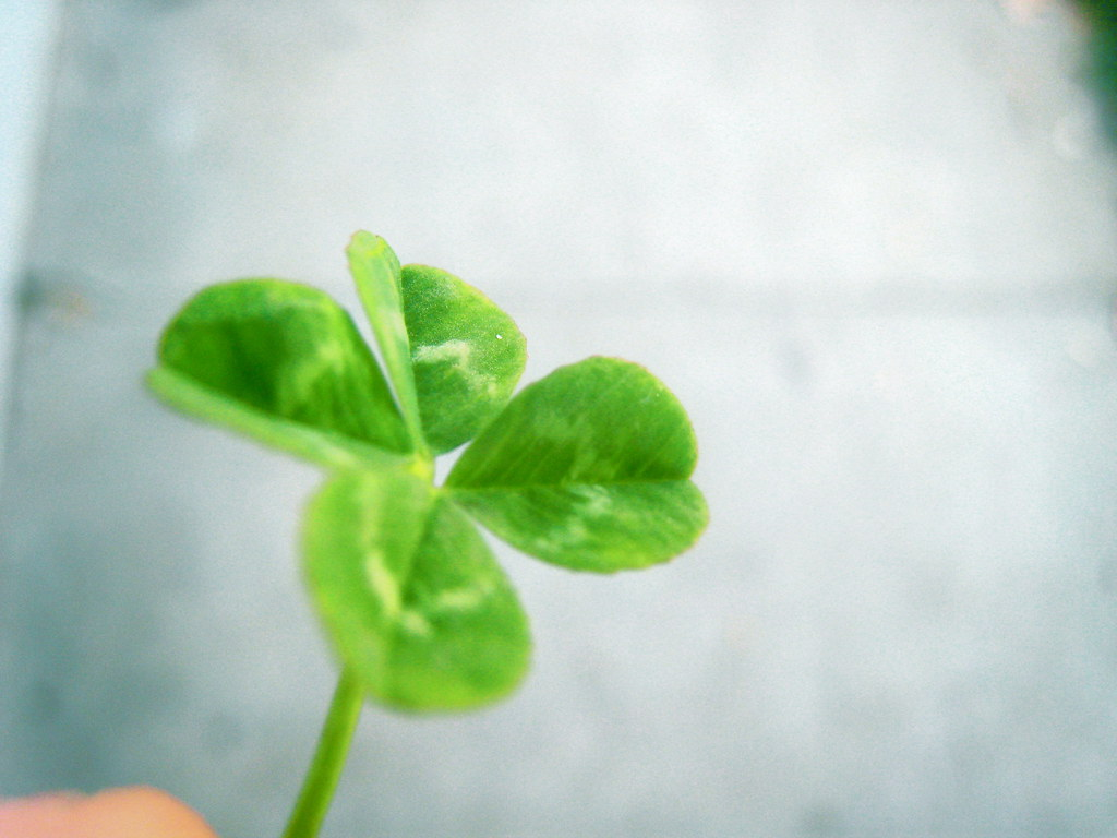 Four Leaf Clover Desktop This Looks Pretty Sweet As A Desk Flickr