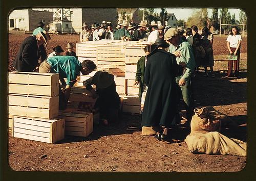 Distributing surplus commodities, St. Johns, Ariz. (LOC)