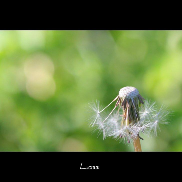 Loss (Explored)