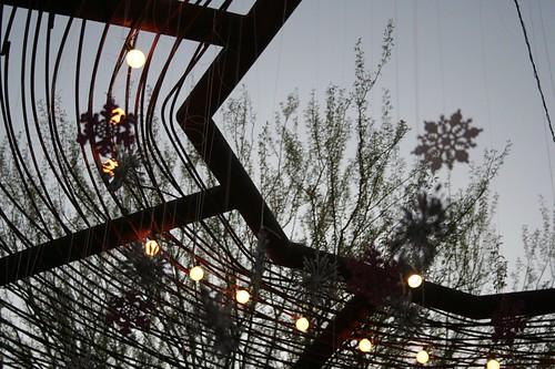 Phoenix foliage
