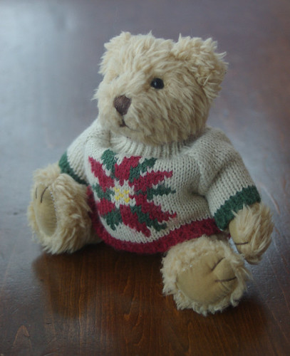small bear in a sweater by gnawledge wurker