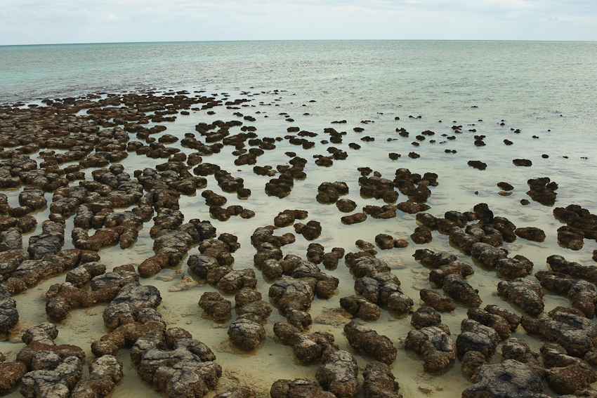 Stromatolites - Lebende Steine