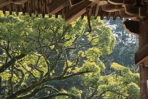 Backlit trees and Maniden Roof, Shoshasan