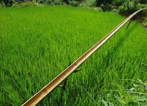 Bamboo Irrigation - Sapa, Vietnam