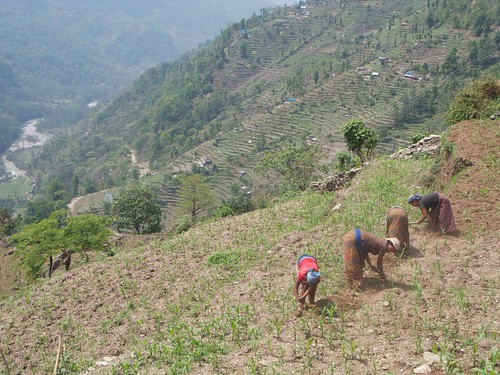 nepal 228